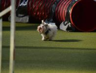 Agility Fun Day (26 mars 2017)